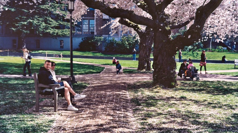 University_of_Washington_Quad_cherry_blossoms_2012